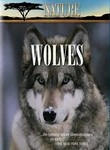 Nature: In the Valley of the Wolves / Christmas in Yellowstone